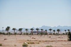 Déchets sur les paumes de fond de sable sur l'Egypte Image stock