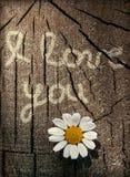 Déclaration de l'amour sur une texture en bois avec la fleur Photos libres de droits