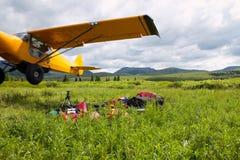 Décollage plat de joueur de pipeau de buisson jaune de petit animal photographie stock libre de droits
