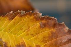 Décomposition de feuille d'automne Photographie stock libre de droits