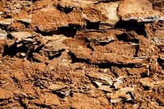 Décomposition haute étroite Ant Eaten Log d'extrémité images libres de droits