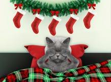 Décoré pour le salon de nouvelle année avec le chat mignon utilisant le costume de Santa photographie stock libre de droits