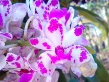 Décor aigu pourpre de bouquet Images stock