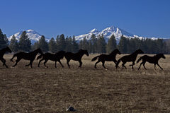 Décor de cheval en métal Image libre de droits
