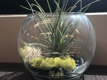 D?cor en verre de table avec de la mousse verte et jaune se trouvant au-dessus de la table model?e noire photos stock