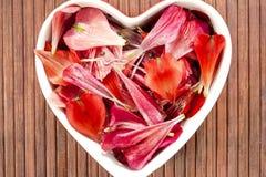 Décor floral de forme de coeur d'amour de pétales de ressort. Photo stock