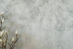 Décor minimal de branche de fleur de mur gris tendre de stuc image stock