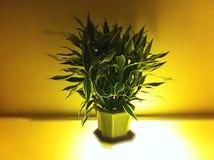 décoration Image libre de droits