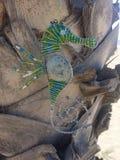 Décoration accrochante d'hippocampe sur le palmier images libres de droits