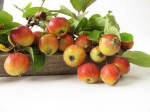 Décoration automnale avec des pommes sauvages Image libre de droits