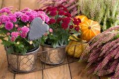 Décoration automnale avec les fleurs et le coeur Photo libre de droits