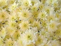 Décoration avec des fleurs trouvées sur la tombe. Image libre de droits