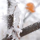 Décoration d'hiver de nature Photos stock