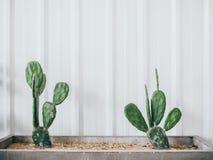Décoration d'usine de cactus image stock