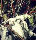 Décoration de chute de neige d'arbre images libres de droits