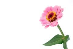 Décoration de configuration de fleur Photographie stock libre de droits
