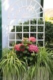 Décoration de fleur pour la terrasse : hortensias et comosum roses de chlorophytum photo stock