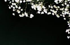 Décoration de fond de noir de couquet de fleurs blanches photos stock