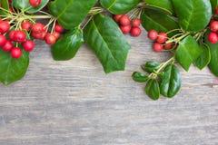 Décoration de Holly Christmas Images libres de droits