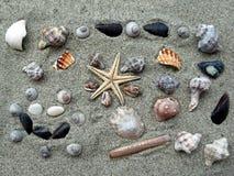 Décoration de mélange de mer Image libre de droits