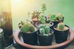 Decoration De Maison De Botanique De Plante Verte De Cactus Petite Dans Le Pot Photo Stock Image Du Petite Dans 109541974