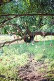 Décoration de mariage des bouteilles de glas avec des fleurs Images libres de droits