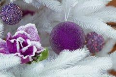Décoration de Noël sur l'arbre de sapin blanc, les boules pourpres et la fleur Photos stock