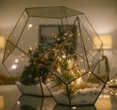 Décoration de nouvelle année ou de Noël, florarium en verre, humeur de vacances photo stock