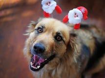 Décoration de port de sourire mignonne de Noël de chien pelucheux sur la tête images libres de droits