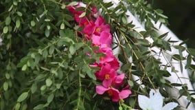Décoration de voûte de fleur de mariage Voûte de mariage décorée des fleurs et de la décoration banque de vidéos