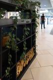 Décoration du hall de centre commercial - plantes vertes avec des feuilles - briques jaunes image stock