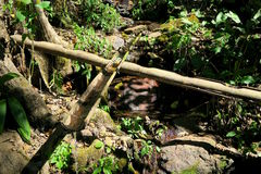 Décoration en bambou de jardin dans la forêt Photos stock