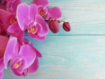 Décoration en bois de cadre de fragilité colorée par fleur d'orchidée photographie stock libre de droits