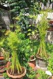 Décoration fleurie de jardin Photo stock
