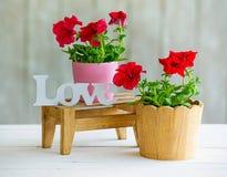 Décoration intérieure de floraison Images stock