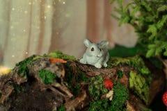 Décoration - lapin sur le bois de flottage avec de la mousse photographie stock