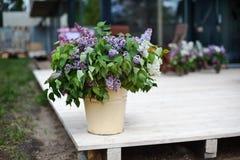 Décoration lilas Photos stock