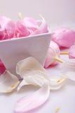 Décoration rose de fleur de tulipe dans un cadre Photos libres de droits