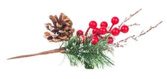 Décoration rouge de baies et de cônes de branche d'arbre de Noël Photos libres de droits
