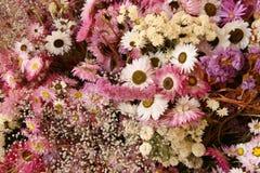 Décoration sèche de fleurs photographie stock libre de droits