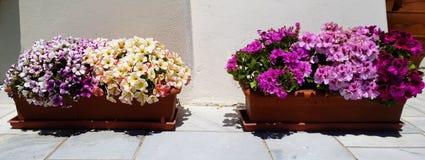 Décoration sur la rue d'Oia dans Santorini - pots de fleur et fleurs brillamment colorées Image libre de droits