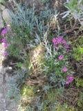 Décoration verte de jardin Photo libre de droits
