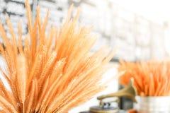 Décorations de bouquet d'herbe de mission dans le vase Images libres de droits