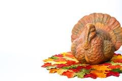Décorations de thanksgiving Photos stock