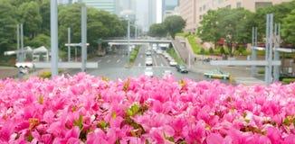 Décorations roses de fleur Photo libre de droits