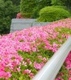 Décorations roses de fleur Photos libres de droits