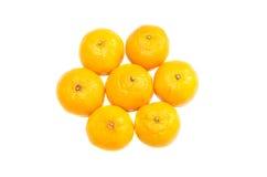 Découpé en tranches sur des tranches de plat de kiwi de fruit tropical sur un fond blanc Photographie stock libre de droits