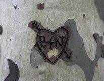 Découpé sur un arbre le symbole du coeur d'amour avec la flèche Photo stock