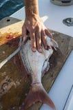 Découpage des filets de poissons Photos stock
