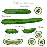 Découpage en tranches anglais réglé d'illustration de vecteur de concombre long, marinant, cornichon, conserves au vinaigre, Burp Photos stock